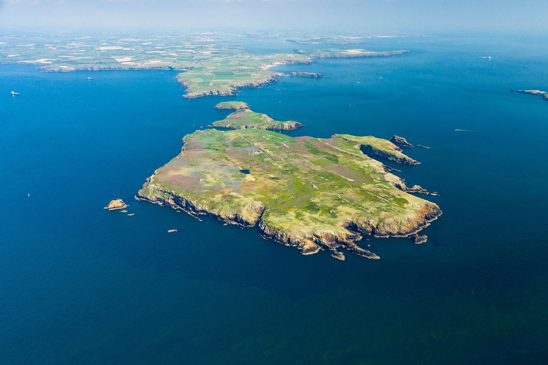 Skomer Island - Visit Pembrokeshire
