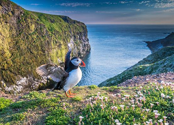 Visit-Pembrokeshire-Brand Assets